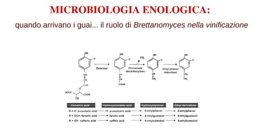 Microbiologia enologica