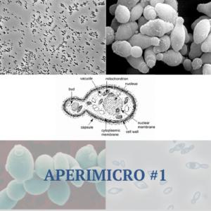 Aperimicro #1