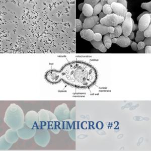 Aperimicro #2