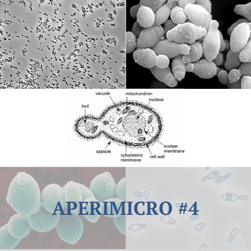 Aperimicro #4