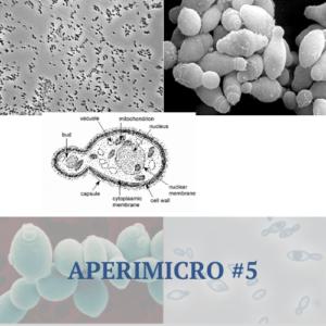 Aperimicro #5